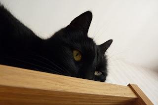 Syntolkning: Svart katthuvud tittar fram ovanpå en ekfärgad bokhylla.