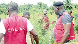 Nigeria Drug Law Enforcement agency (NDLEA)