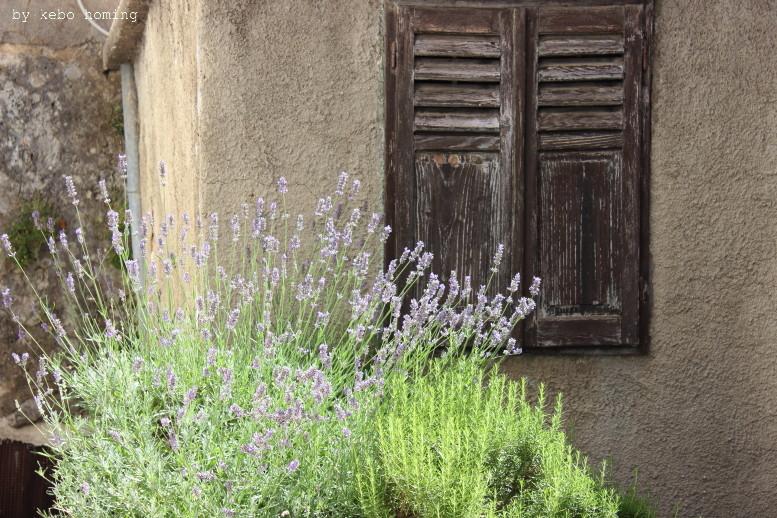 Kebo unterwegs... Kroatien, Vrbnik auf Krk, Sommerurlaub, Dorf auf Krk, Reisen mit Kindern, Lavendel, Kebo homing, der Südtiroler Food- und Lifestyleblog