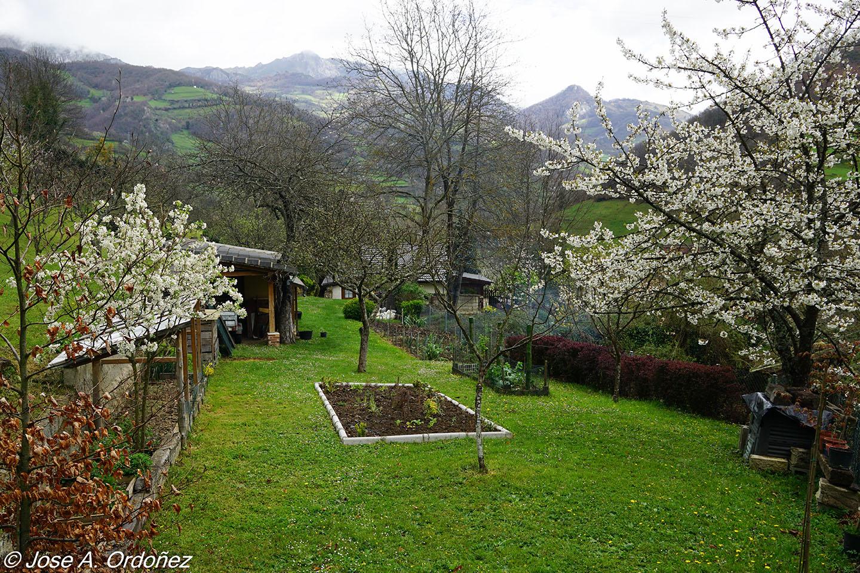 El jard n de la barrosa un arriate low cost en el huerto for Arriate jardin