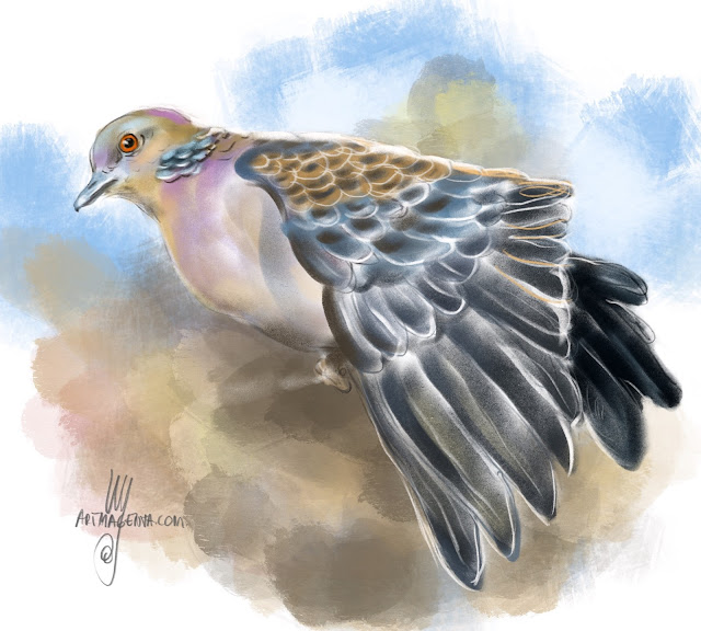 European turtle dove Bird painting by Artmagenta