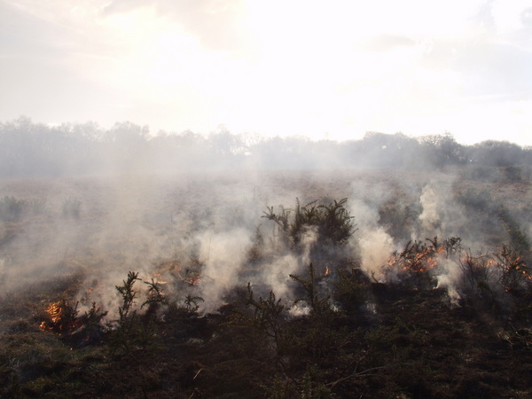 A  small heathland fire in Devon. Photo copyright Devon Wildlife Trust