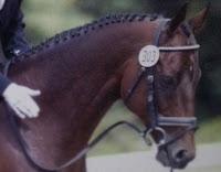 Braiding Horses
