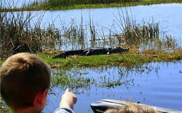 Florida airboat tours