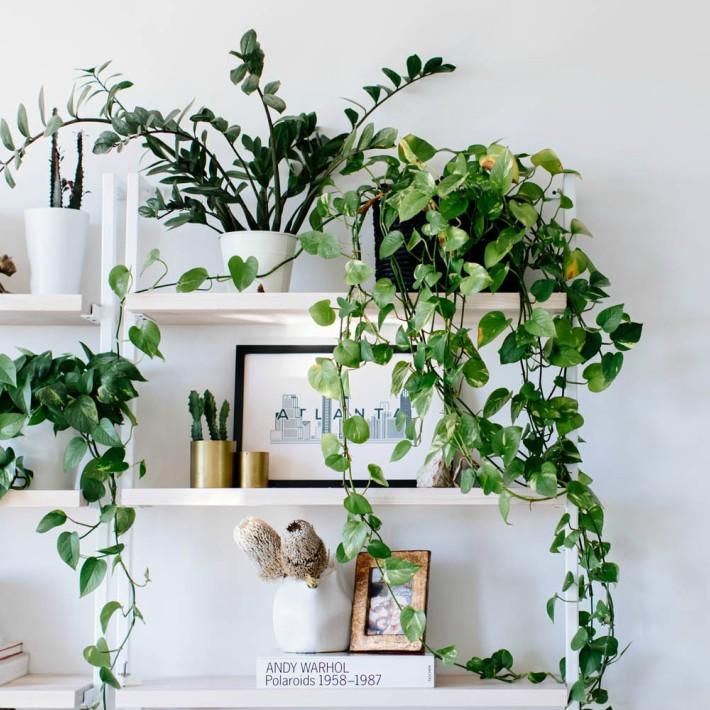 6 plantas ideales para espacios con poca luz