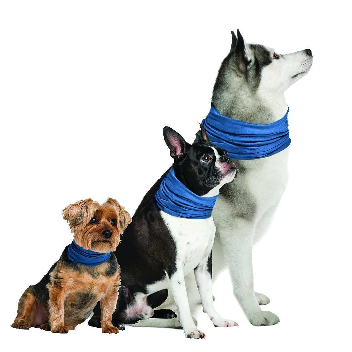 Cooling Bandanas for Dogs | How to Keep a Dog Cool in the Summer (www.danslelakehouse.com)