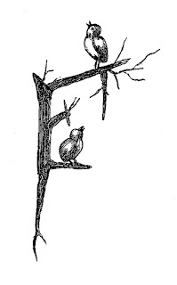 bird branch artwork pencil drawing digital download