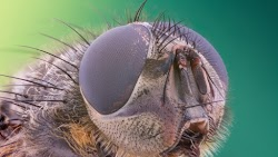 Insects in 3 Super Macro Images