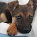 TIPY: Jak se připravit na štěně