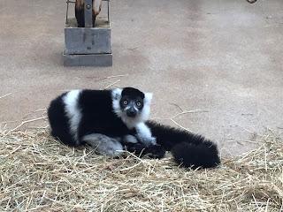 12 von 12 im September: Die Lemuren sind lustig