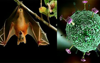 Nipah-virus-symptoms-Nipah-of-Virus