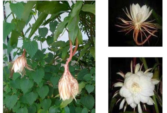 Kunci Jawaban Contoh gerak tumbuhan berikut yang bukan ...