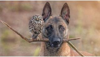 Ένας σκύλος και μια κουκουβάγια έχουν γίνει αχώριστοι φίλοι και δεν μπορούν να ζήσουν ο ένας χωρίς τον άλλον!