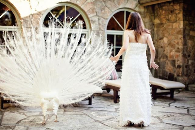 婚禮攝影錄影推薦