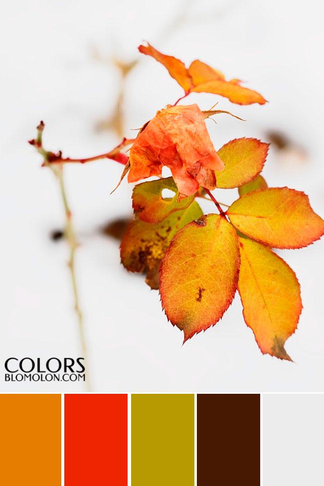 paletas_de_colores_mes_de_septiembre_8