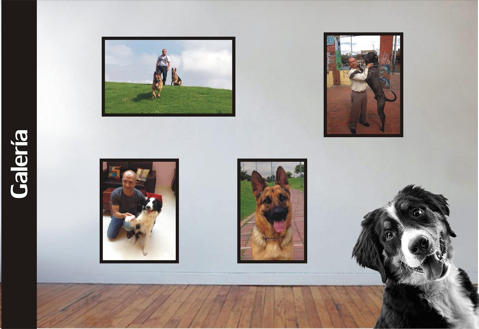 Para Perros y Perritos