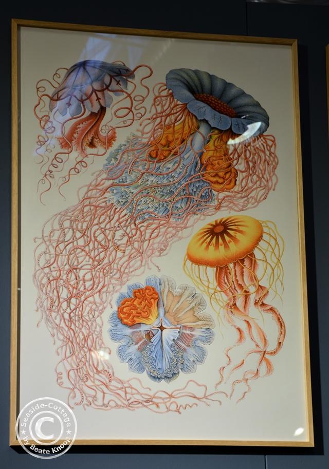 Dybdahl Prints Fauna & Flora