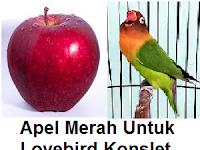 Cara Mambuat Ramuan Sari Apel Merah Untuk Lovebird Konslet Ngekek Panjang
