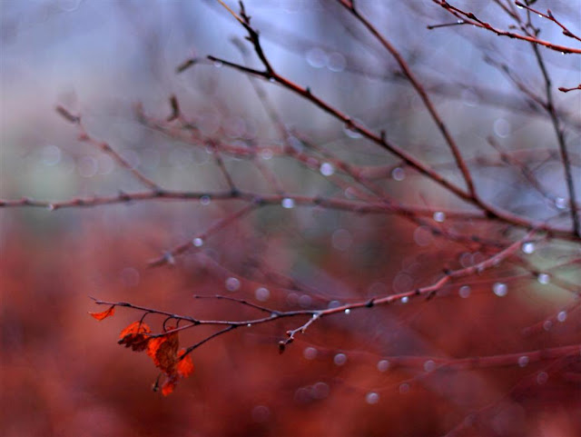 branches with raindrops