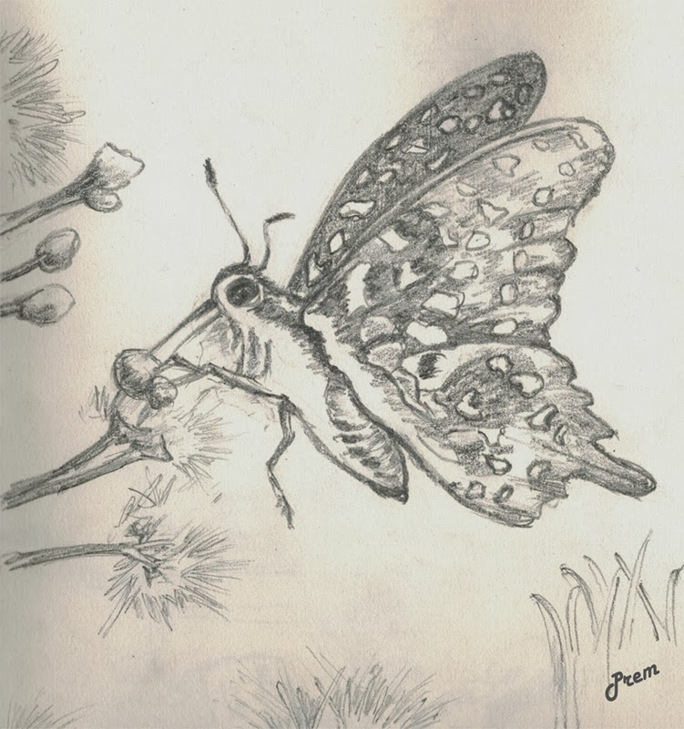 Sketch of a Butterfly