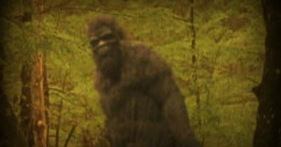 Bigfoot Observed While Fishing at Lake Barkley, Kentucky