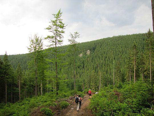 Przed nami dolina Białej Lądeckiej, a za nią Góra Pasieczna (927 m n.p.m.).