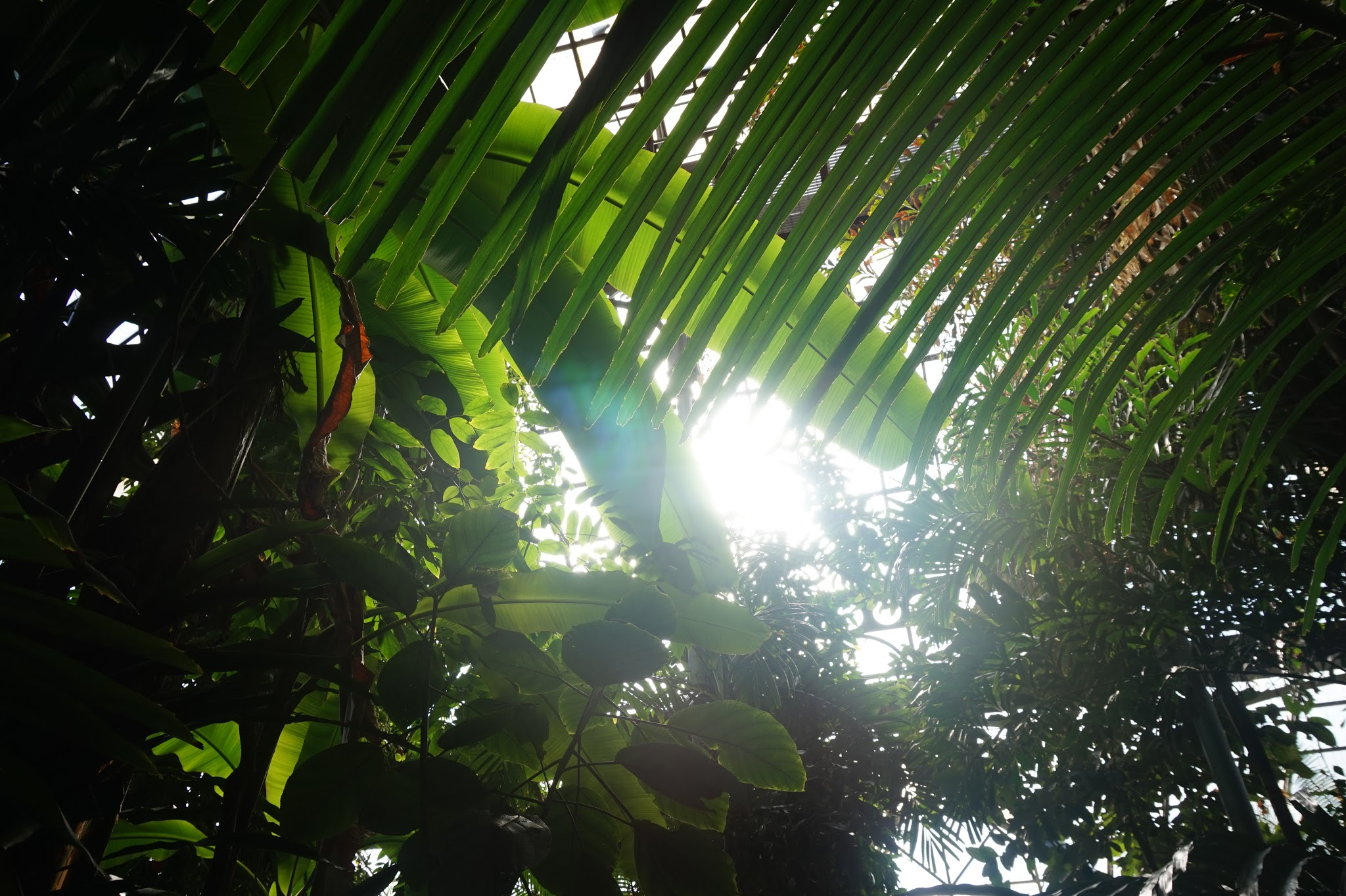 sunlight streaming through huge tall plants