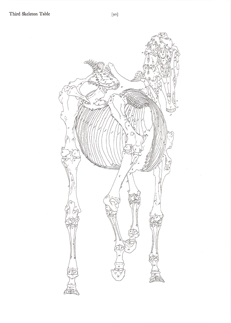 "Research of Artistic Anatomy: George Stubbs ""THE ANATOMY OF THE ..."