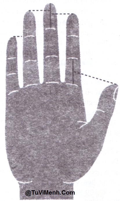 Độ dài tiêu chuẩn của 5 ngón tay