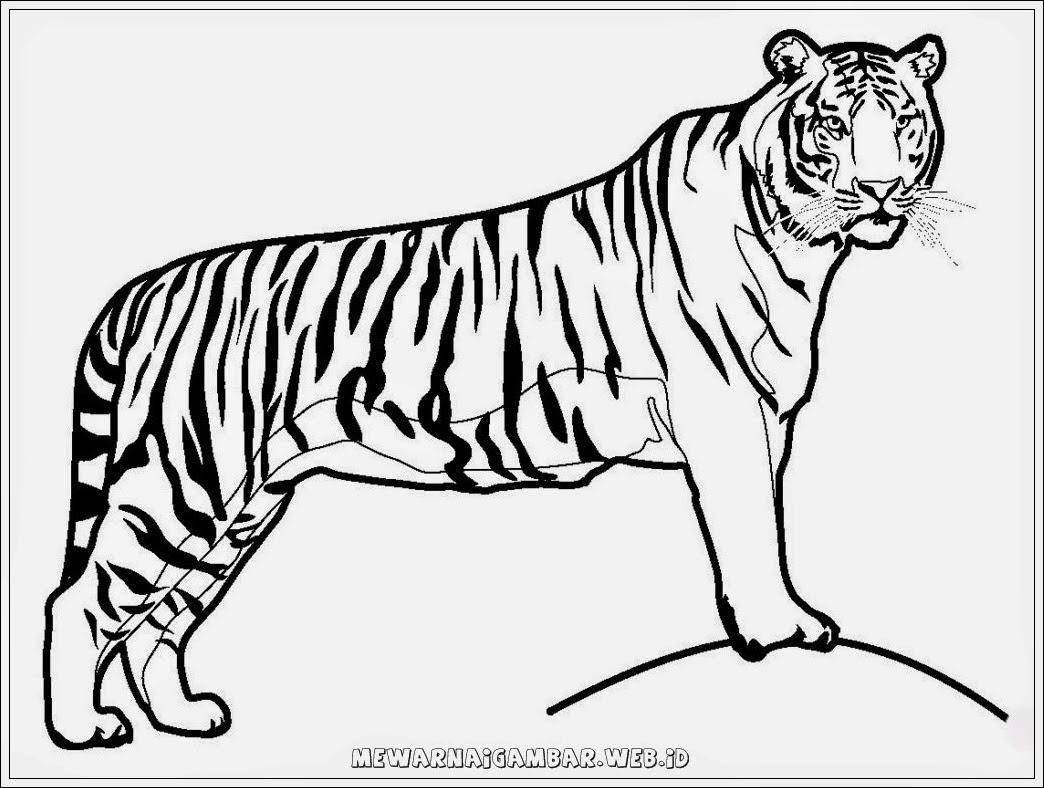 Unduh 7500 Koleksi Gambar Harimau Untuk Kolase Terbaik