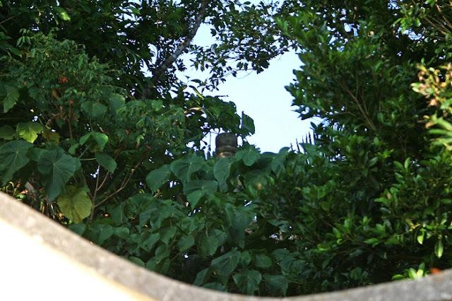 舜天・舜馬順熈・義本の三王の墓の写真