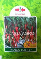 Cabai Panex, Cabe Panex, Cabai besar, Harga Murah, benih petani,tahan virus, buah lebat, cap Panah Merah, tahan layu, tahan cekaman calcium