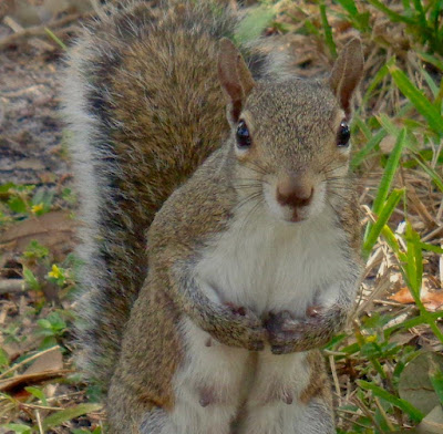 Squirrel shystering