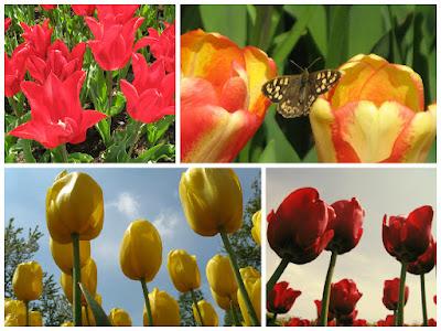Парк квітів Койкенхоф: тюльпани