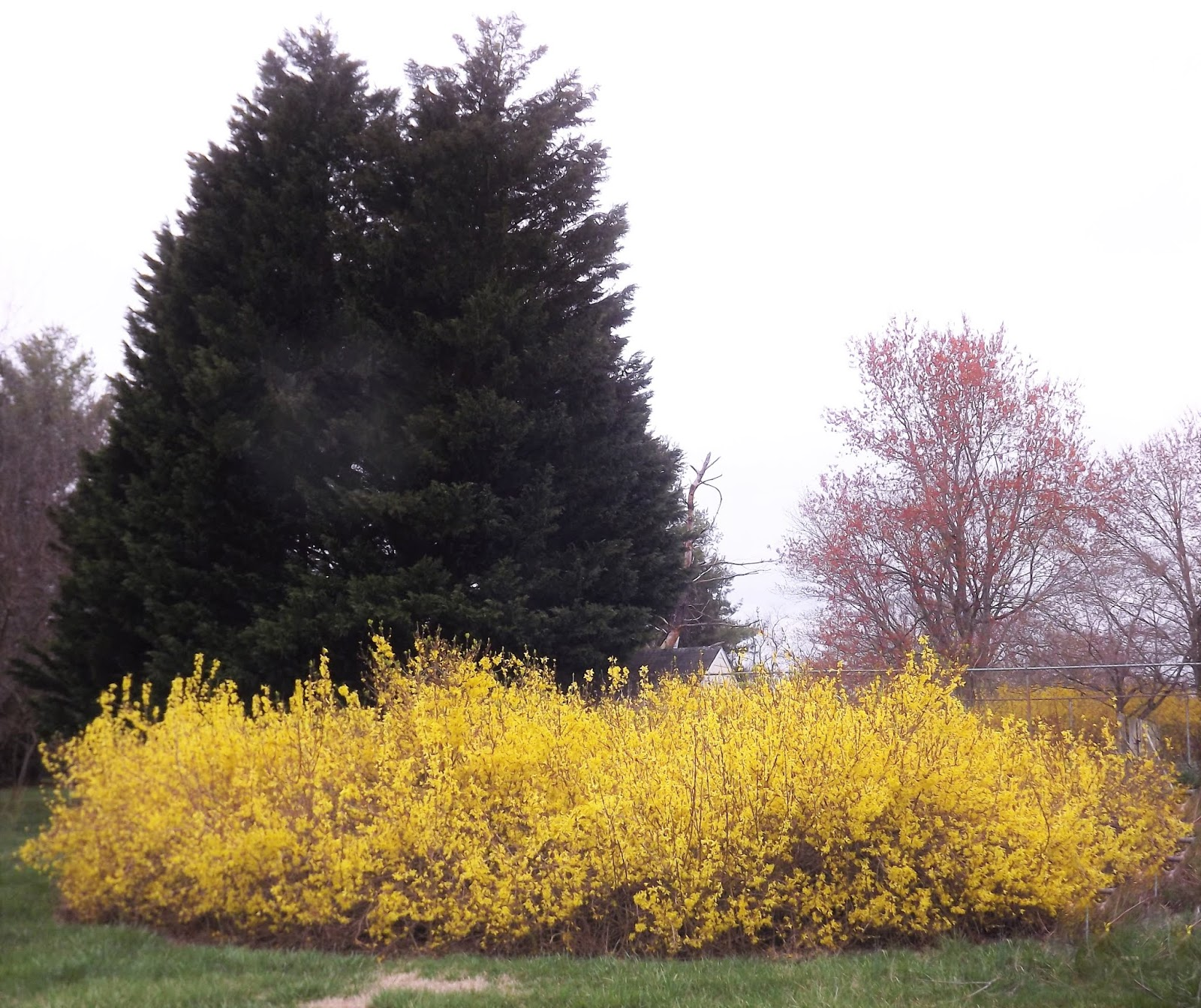 Forsythia Hill Finds March 2019