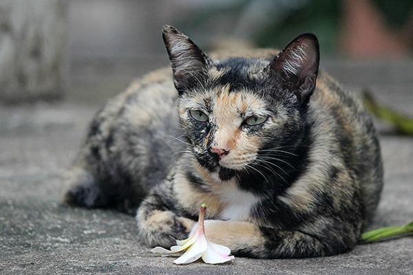 cats in bangkok