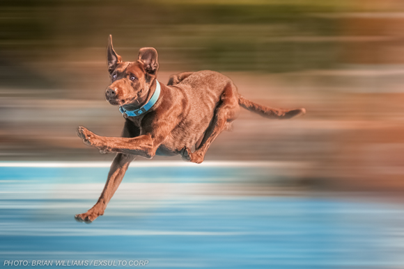 Dock Dog Flying