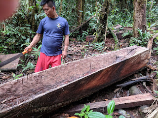 dugout canoe stern and builder in el Oriente, Ecuador