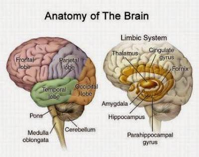 Gejala Kanker Otak dan Cara Mencegahnya