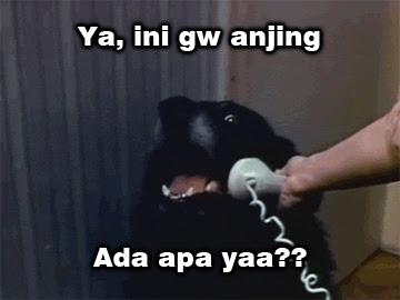 panggilan anjing