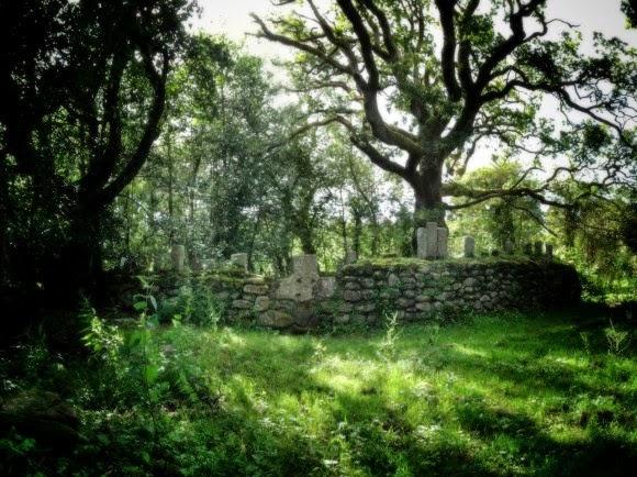 Knockma Woods Irlandia