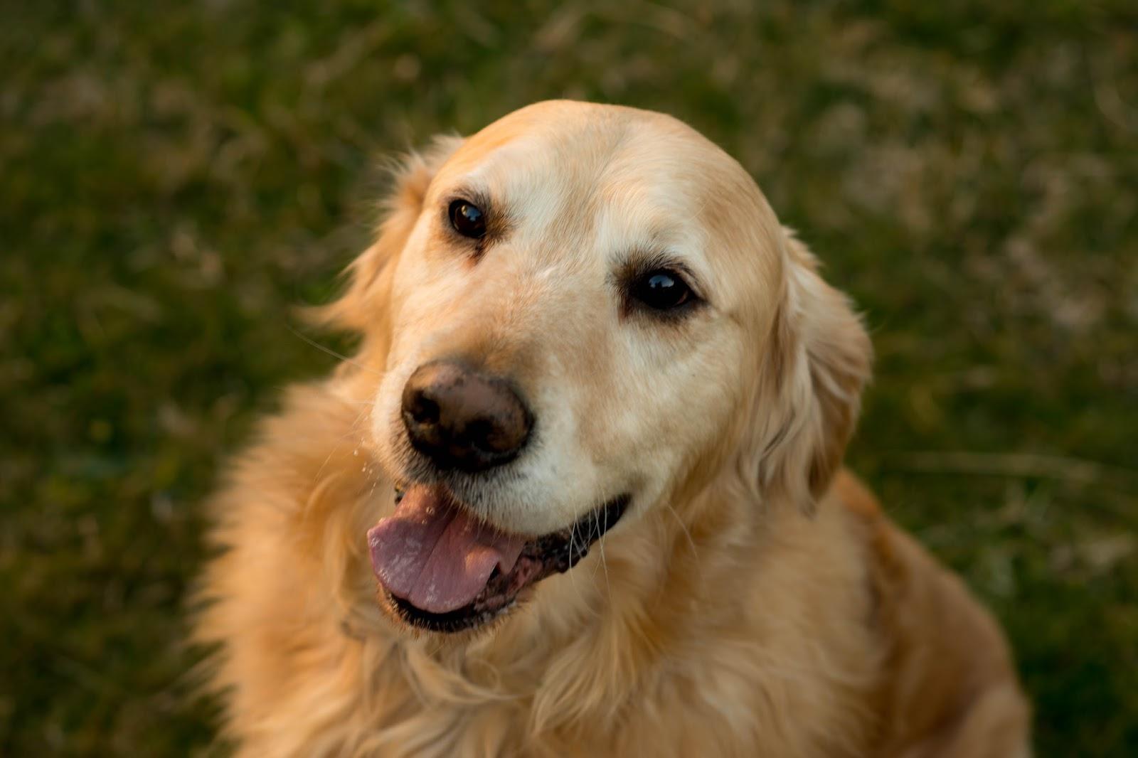 Australia Favourite Dog