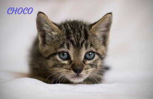 gatitos en adopcion 3