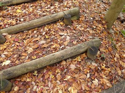 くろんど池 秋の紅葉ウォーキング 紅葉の落ち葉
