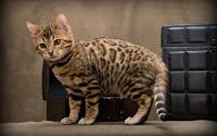 [صورة مرفقة: cats7.jpg]