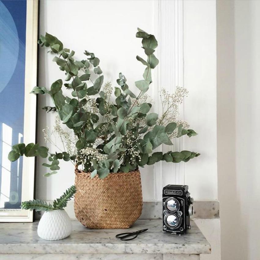 decoración con eucalipto 8