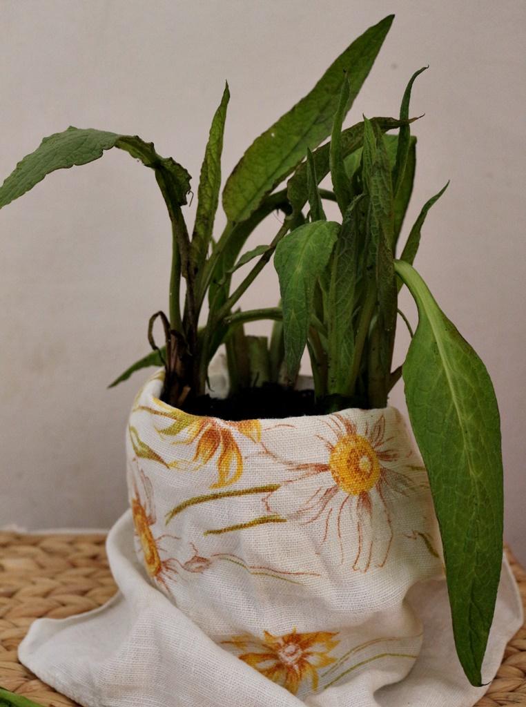 Żywokost-cudowna roślina na trądzik, bóle stawów i blizny.