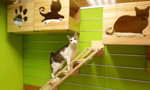 Cubículos para gato en pared