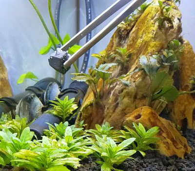 Using Seachem Flourish tabs in a planted betta tank