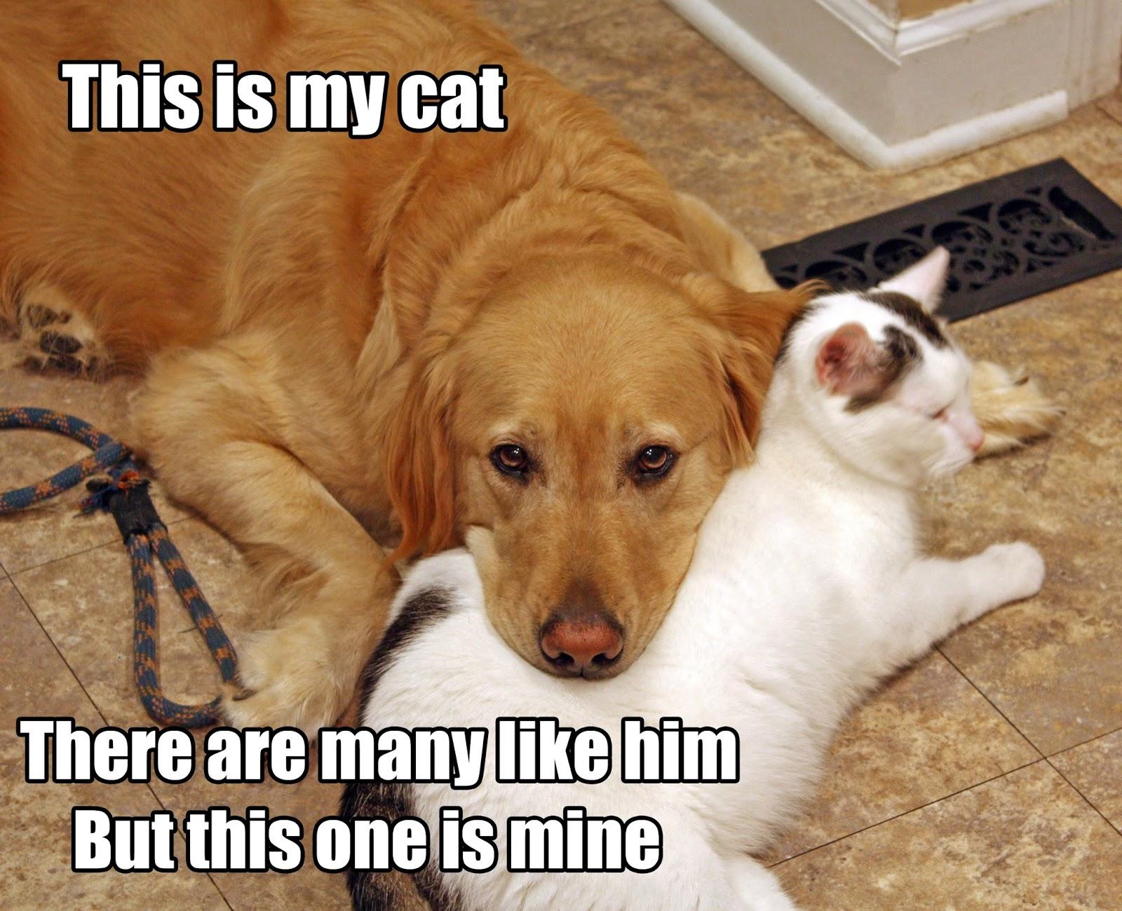 Raising a Super Dog - moved to rasuperdog.com: Wordless ... - photo#8